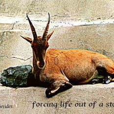 Zoo,goat,poem,haiga,Augsburg,
