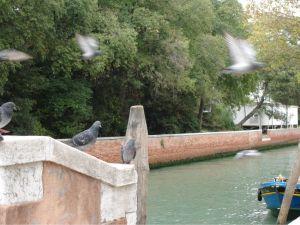Pigeons on the bridgesmall