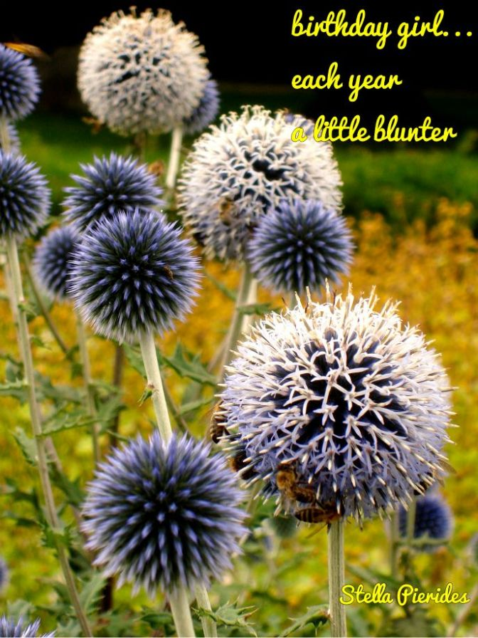 birthday, garden, haiga,thistle,