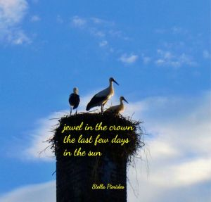 storks,haiga,haiku,chimney,nest,