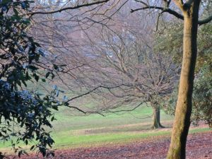 Hampstead Heath,winter grass, London,