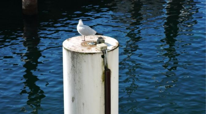 haiku app,seagull,