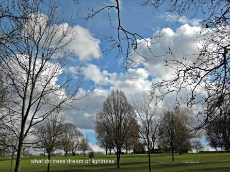 trees,clouds,haiga,