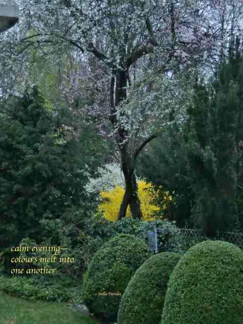 garden,calm evening,