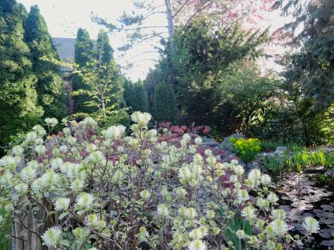 garden,pond,