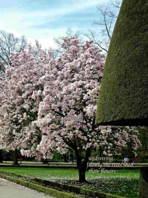 magnolia,haiga,Wuerzburg,