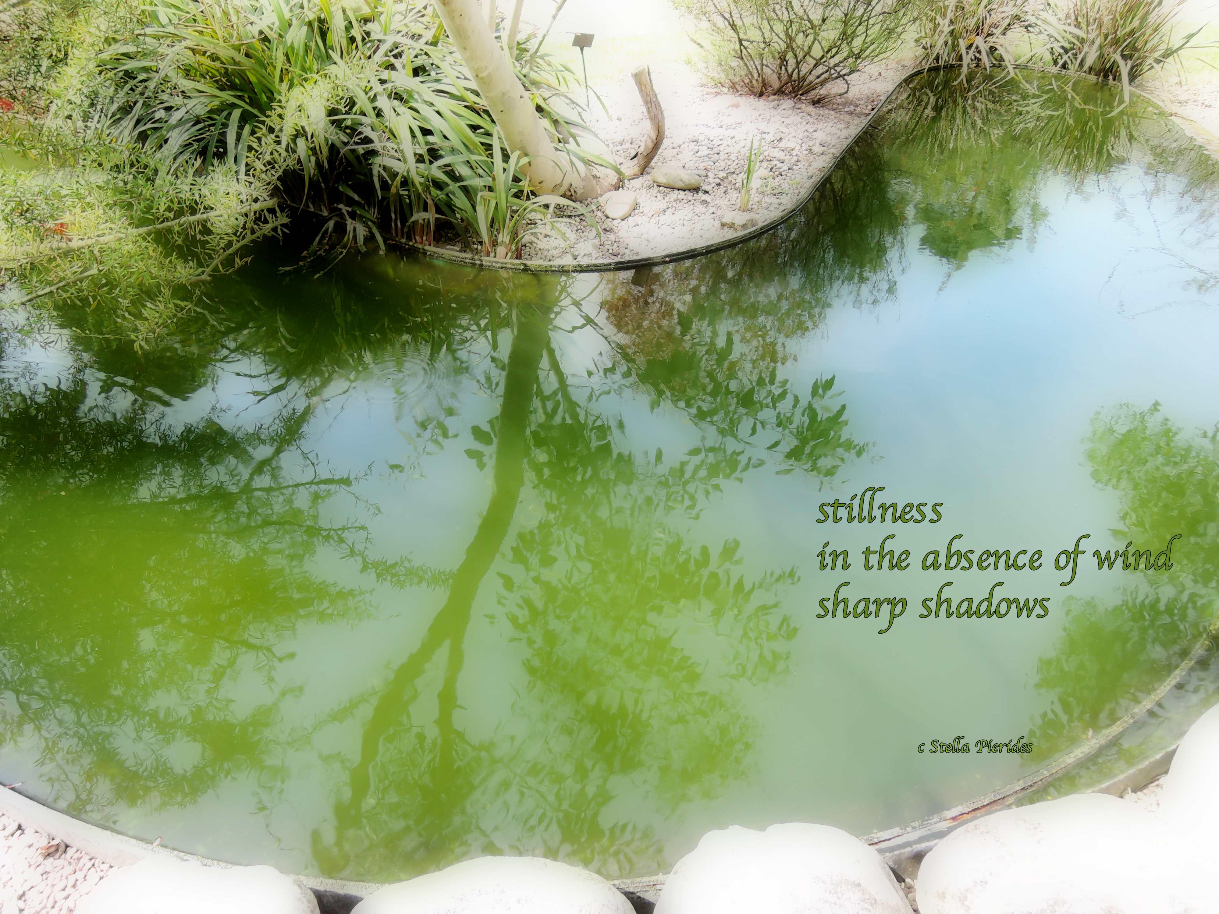 haiga,stillness,haiku,