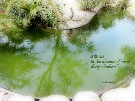 haiga,stillness,haiku,