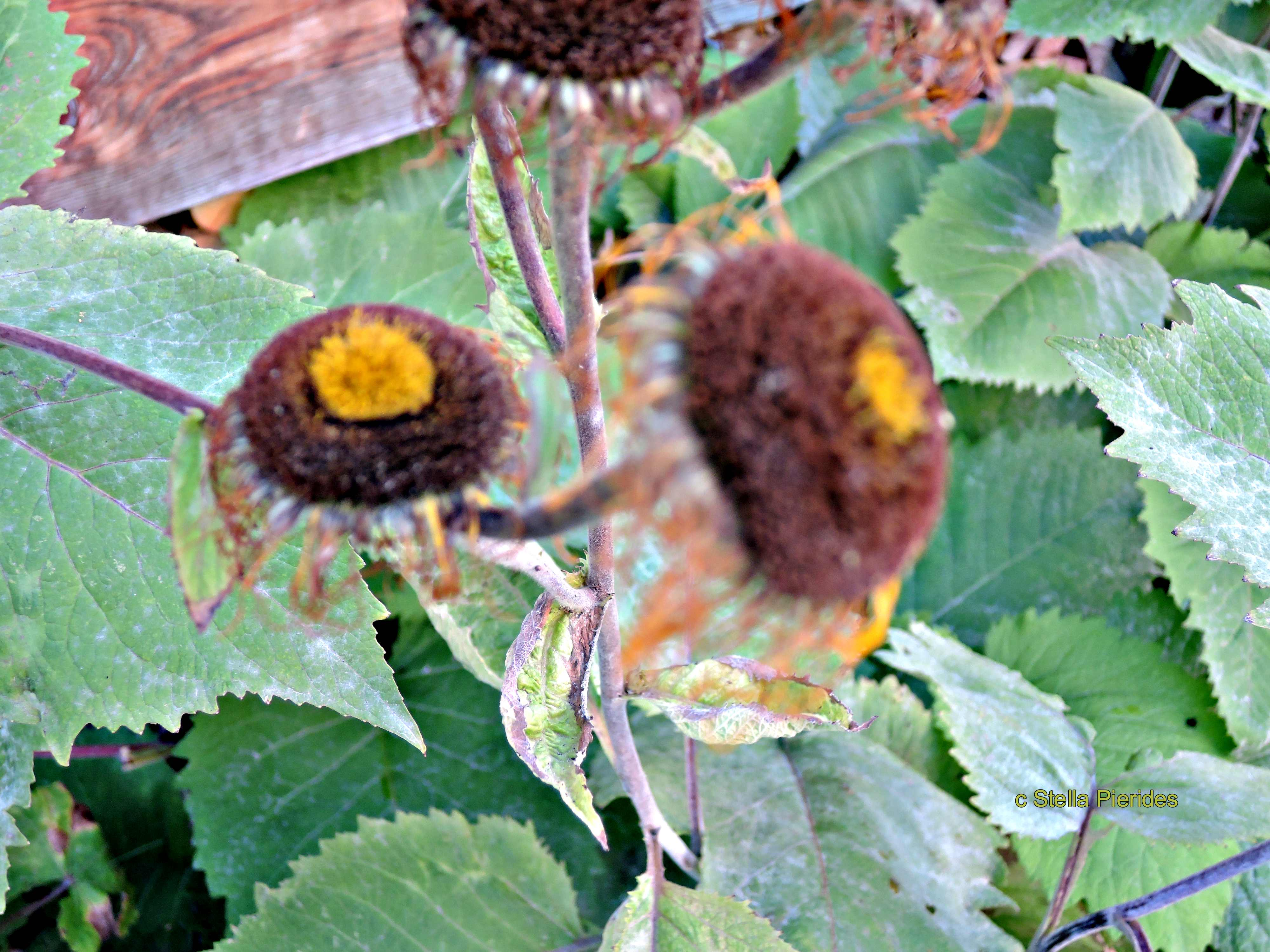 faded flowers,