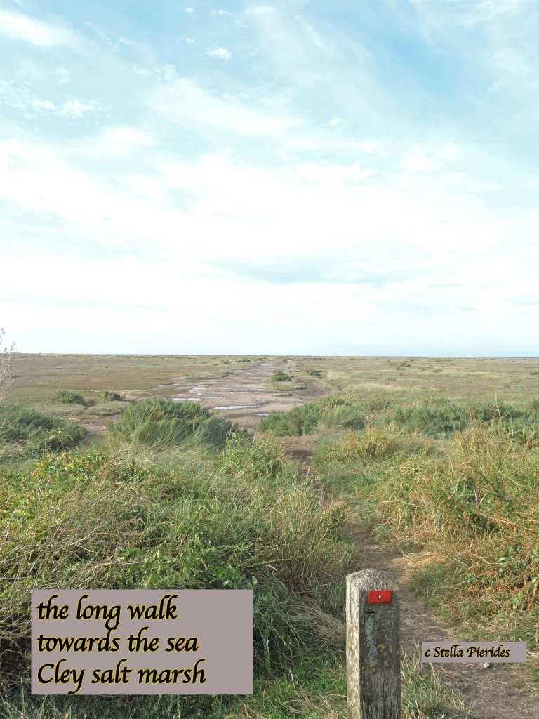 Cley salt marsh,